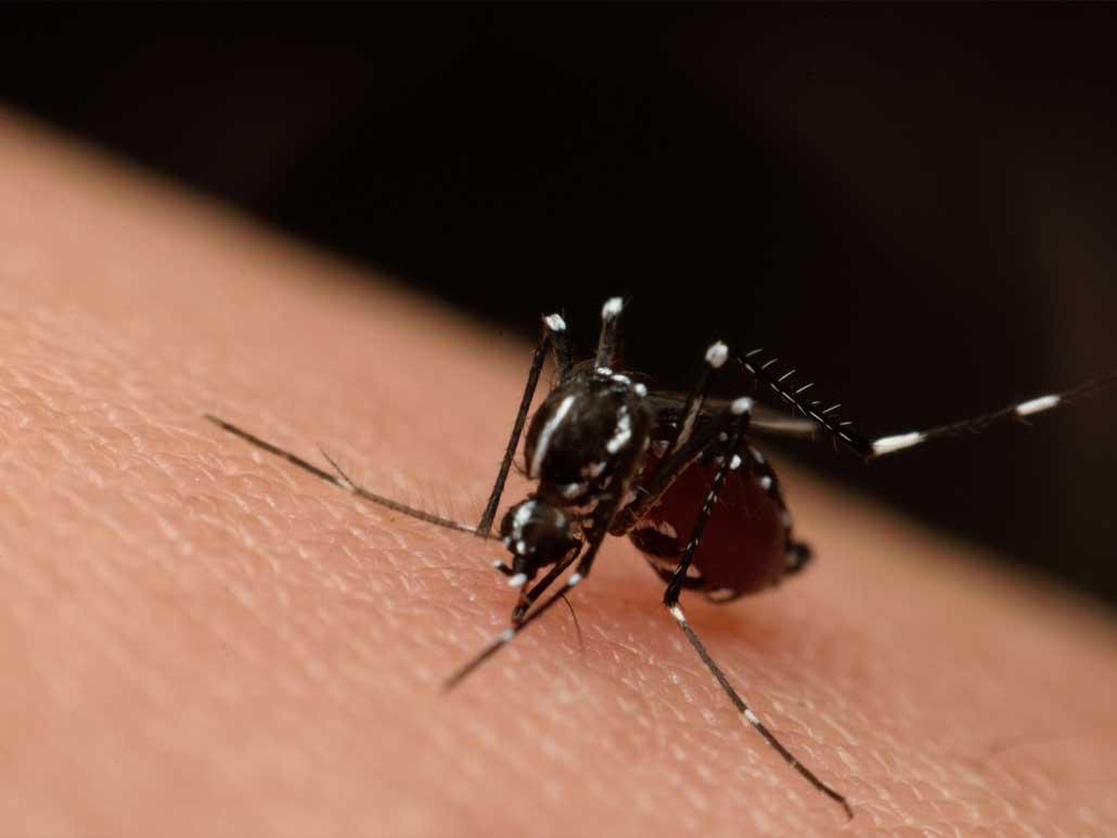 Jak Na Komáry, Jak Se Jich Nadobro Zbavit