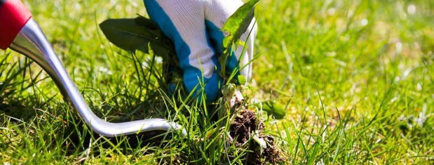Jak se zbavit plevele