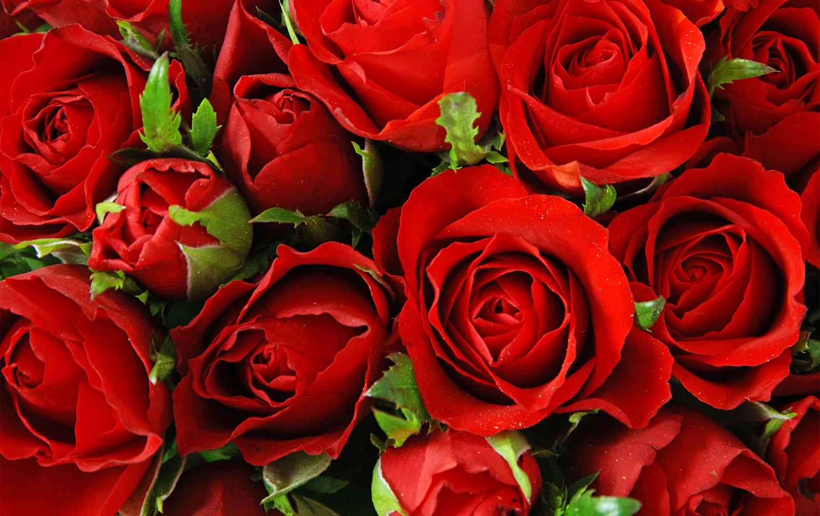 Svazek Růží - Ilustrační Obrázek