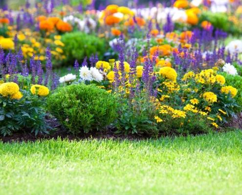 Zazimování zahrady